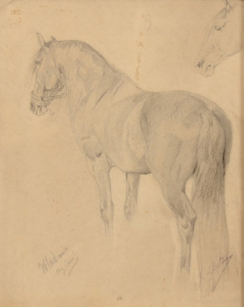 Jean Delvin study drawing of a horse