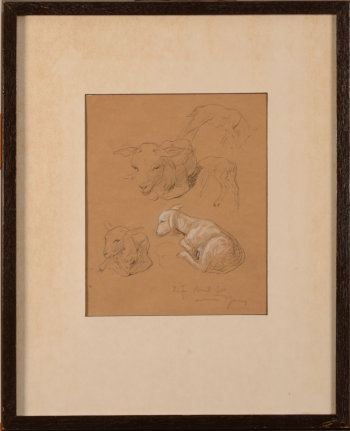 Armand Heins a study of a lamb
